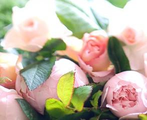 Au Nome de la Rose