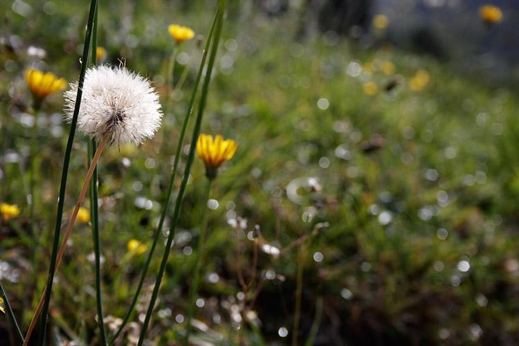 Homelifestyle-Magazine-La-Vall-de-Ribes-cazadores-de-setas-flores-campo