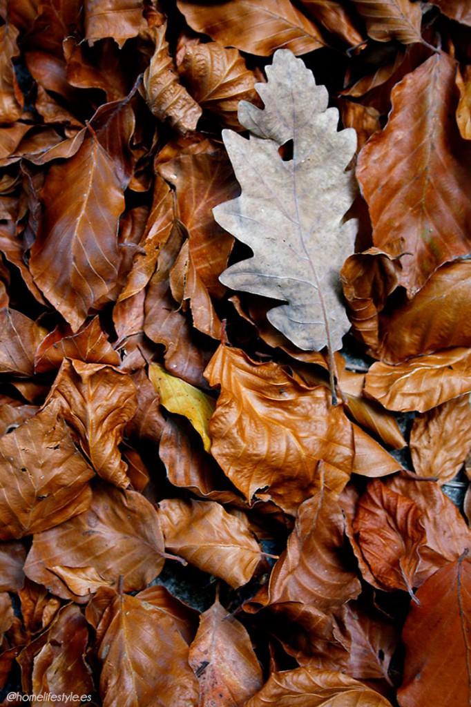 Homelifestyle-Magazine-La-Vall-de-Ribes-cazadores-de-setas-hojas-secas