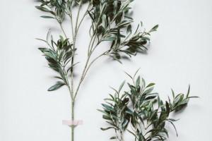 olive-branch-large-remodelista