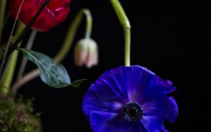 Fotografía-de-arte-floral-by-MariaAlgaraRegas-blue-flower