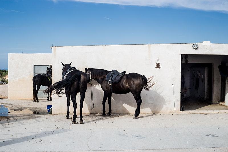 Viajar-a-Formentera-en-primavera-caballos-by-©MariaAlgaraRegas-17