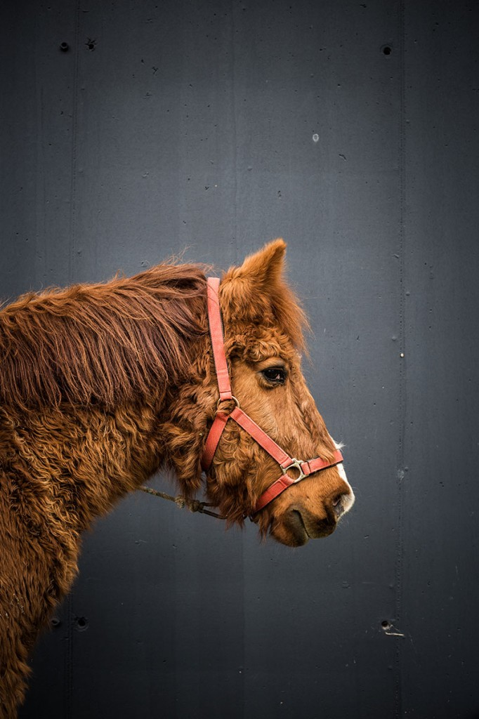nuevas-colecciones-de-mikmax-horses-by-@MariaAlgaraRegas