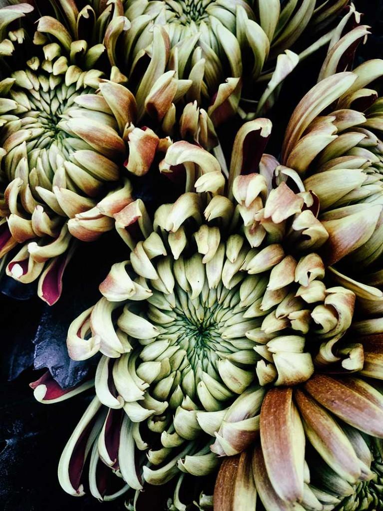 instalación-floral-gran-formato-detalle-MariaAlgaraPhotography-desayuno