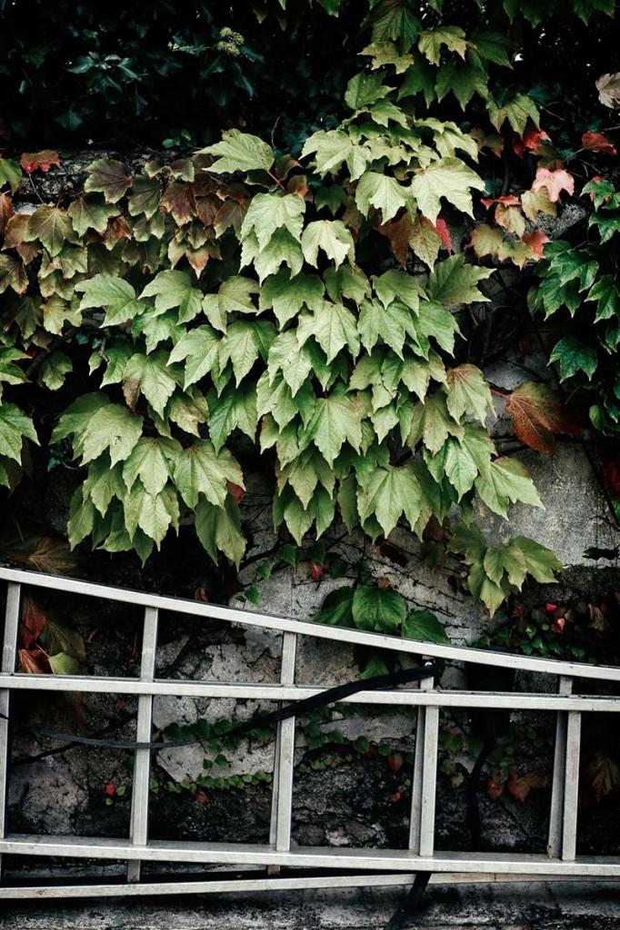 instalación-floral-gran-formato-hiedra-MariaAlgaraPhotography-desayuno