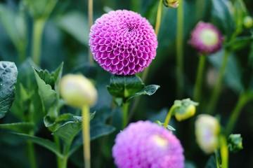 Taller-de-floricultura-detalle