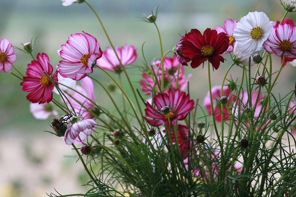 Taller-de-floricultura