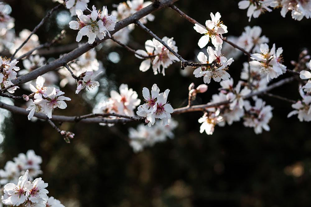 Can-Ribas-@MariaAlgaraPhotography-flors