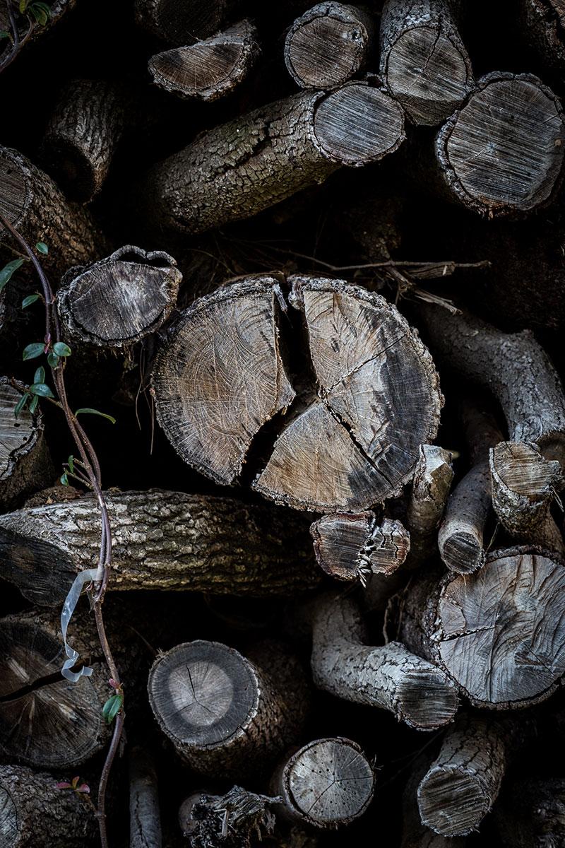 Can-Ribas-@MariaAlgaraPhotography-troncos