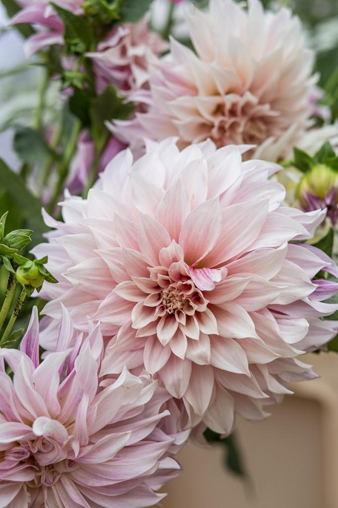 arte-floral-dalia-@mariaalgaraphotography